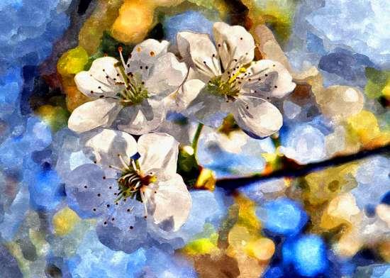 Картина по номерам 40x50 Три цветочка яблони